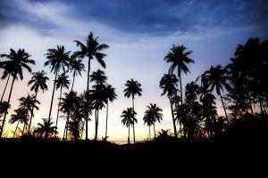 Beton schilderij palmbomen