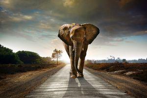 Glas schilderij olifant horizon