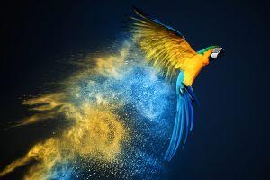 Glas schilderij kleurrijke papegaai