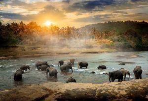 Glas schilderij kudde olifanten