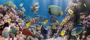 Glas schilderij kleurvol aquarium