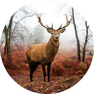 Rond glas schilderij bosrijk gebied hert 80 cm