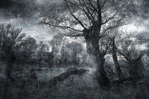 Glas schilderij natuurgebied zwart wit 120x80