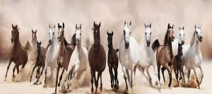 Glas schilderij paarden stormloop 160x60