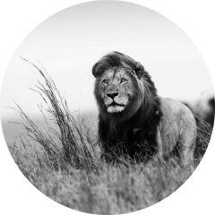 Zwart Wit Foto Leeuw Rond Glas Schilderij 100 cm
