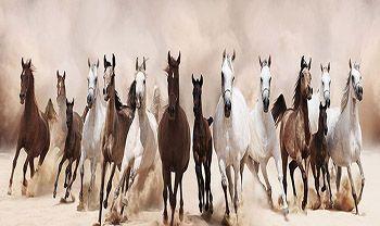 Schilderij stormloop paarden