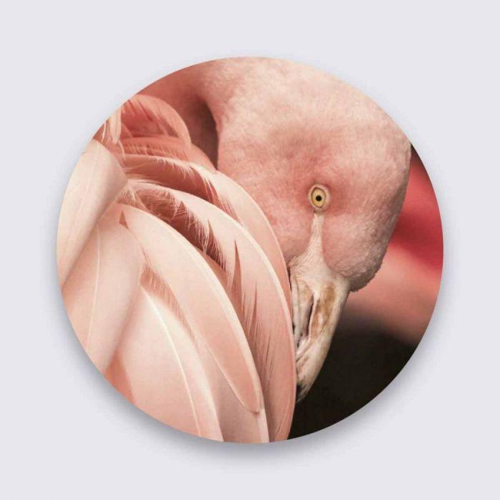 Dieren Schilderijen: Bright Wings Collectie Wandkraft Pure Metal Aluminium Schilderij