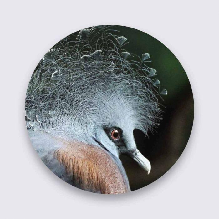 Dieren Schilderijen: Wandkraft Collectie Pure Metal Art Aluminium Bright Wings Schilderij