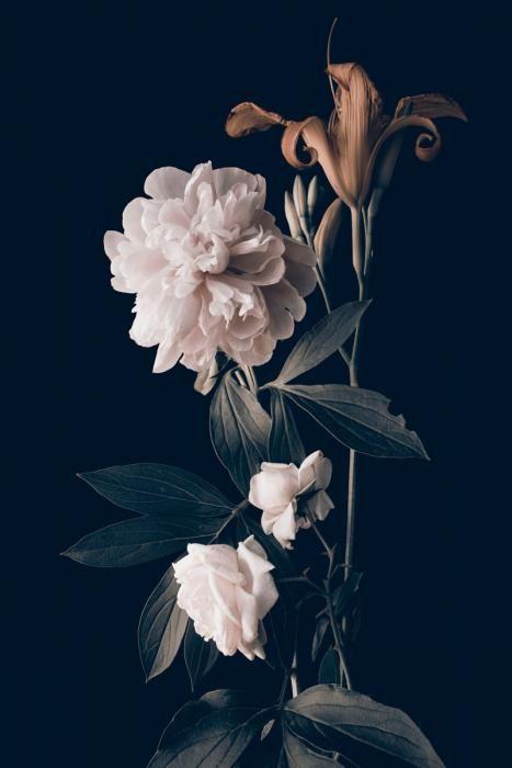 Bloemen Schilderijen: Pioenroos Rozen Lelie Bladeren Bloemen Art Kunst 80x120
