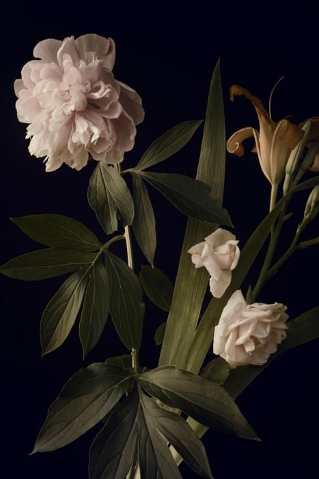 Bloemen Schilderijen: Lelie Pioen Rozen Wit Groen Blad Bloemen Kunst 80x120