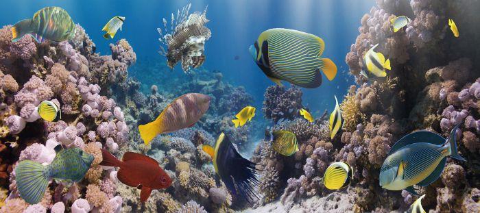 Dieren Schilderijen: Glas schilderij kleurvol aquarium