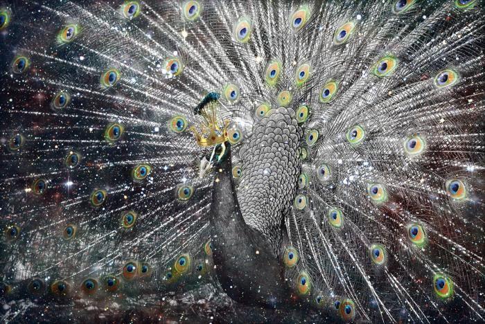 Dieren Schilderijen: Pauw Zilver Goud Kroon Glas Schilderij 120x80
