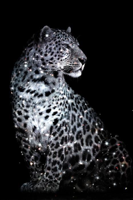 Dieren Schilderijen: Glinsterende Panter Metallic Coating Glas Schilderij 80x120