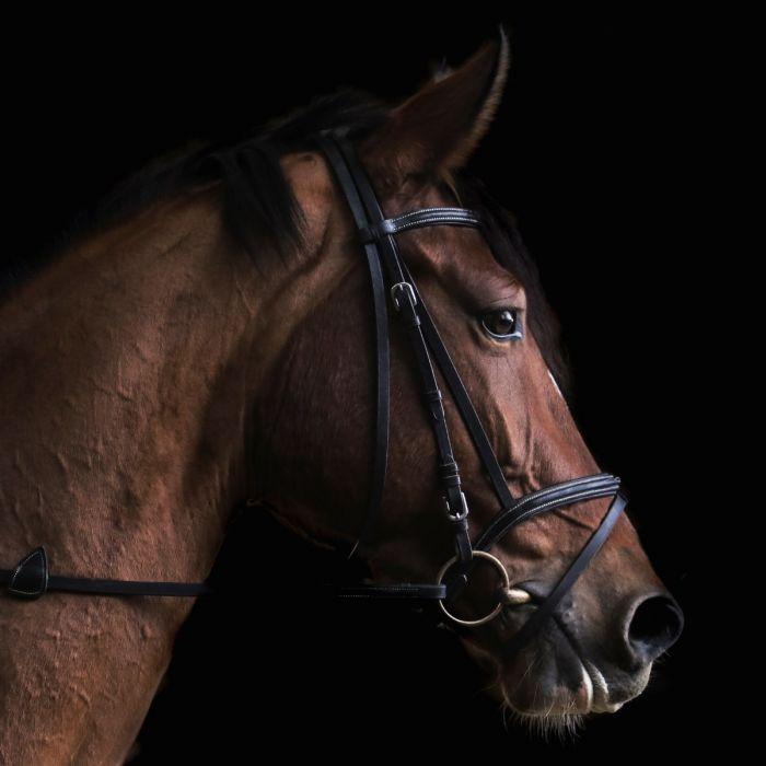 Dieren Schilderijen: Dibond schilderij bruin paard