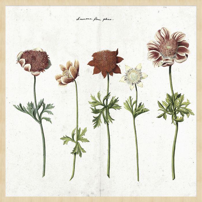 Bloemen Schilderijen: BOTANICAL STORIES 016 - Berkenhout Collectie Wandkraft