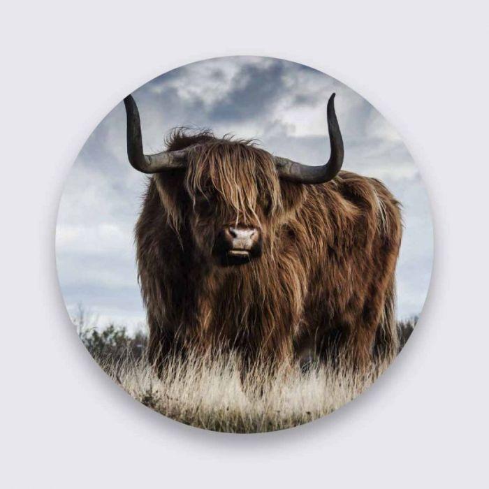 Dieren Schilderijen: Pure Metal Aluminium Schilderij Schotse Hooglander Koe Wandkraft Collectie