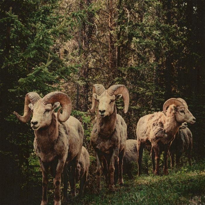 Dieren Schilderijen: EUROPEAN WILDLIFE 003 - Berkenhout schilderij Collectie Wandkraft