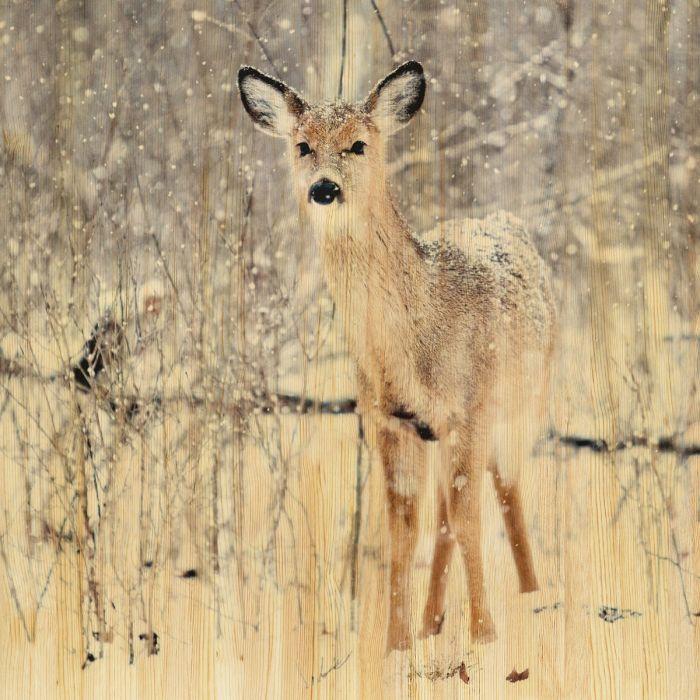 Dieren Schilderijen: EUROPEAN WILDLIFE 007 - Wandkraft Schilderijen