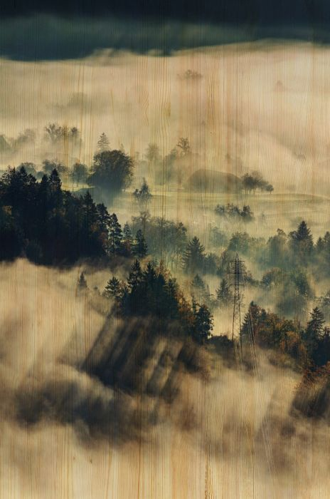 Foto Kunst Schilderijen: Houten schilderij mistig bosrijk gebied