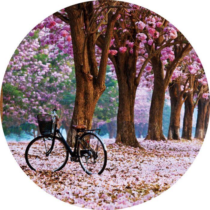 Bloemen Schilderijen: Rond glas schilderij foto kunst roze bloemen boom
