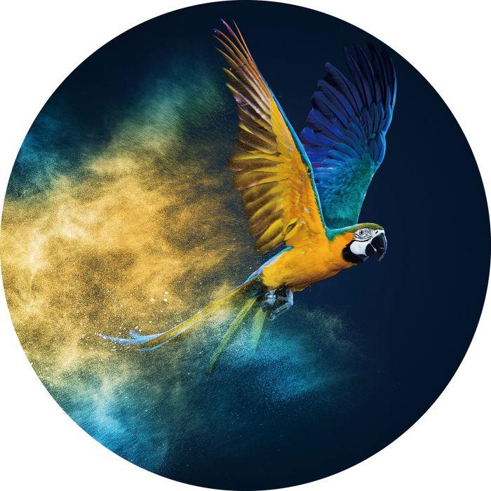 Dieren Schilderijen: Rond glas schilderij foto kunst geel blauwe papegaai