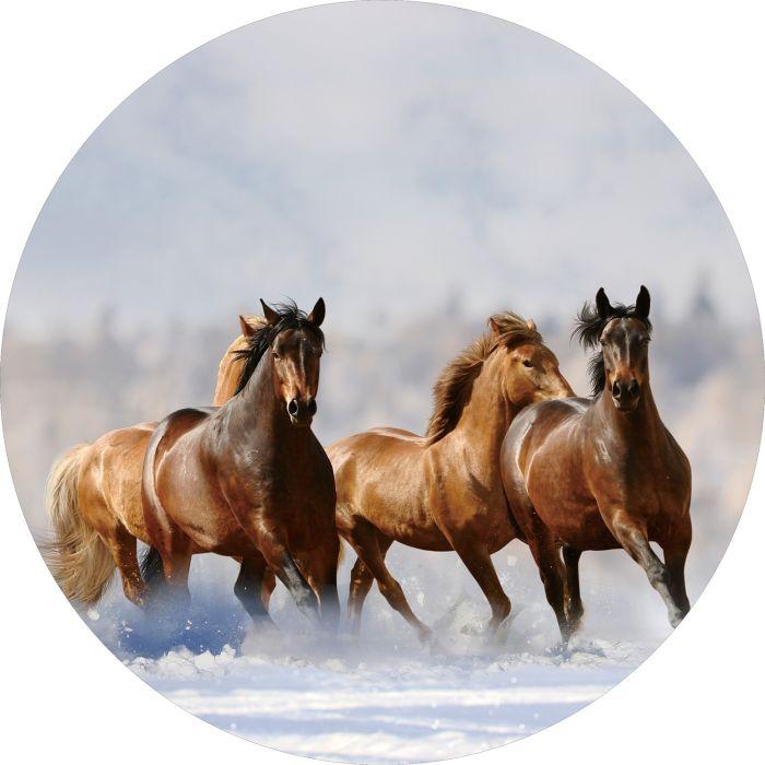 Dieren Schilderijen: Rond glas schilderij foto kunst paarden in sneeuw