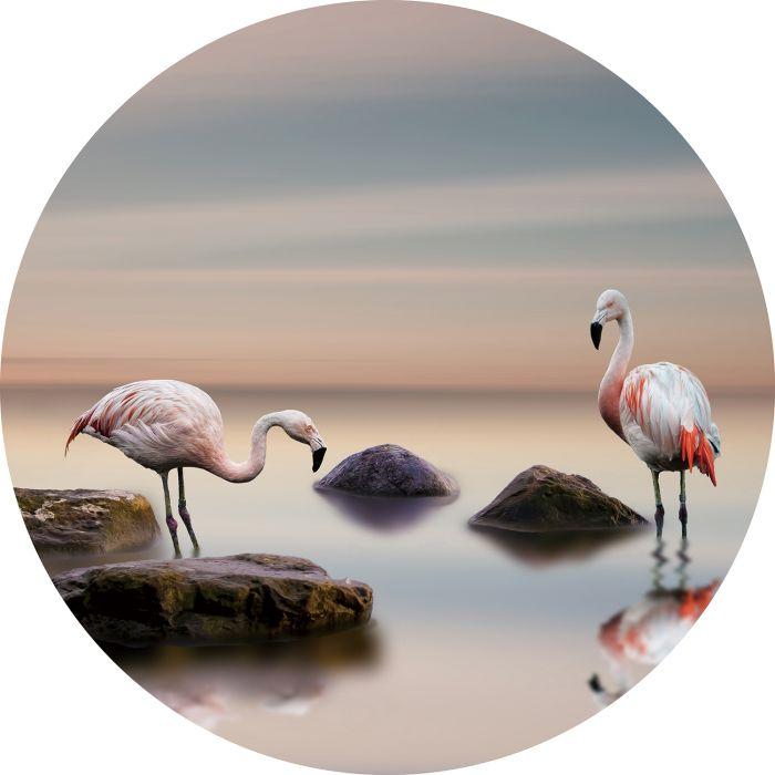 Dieren Schilderijen: Rond glas schilderij foto kunst flamingos