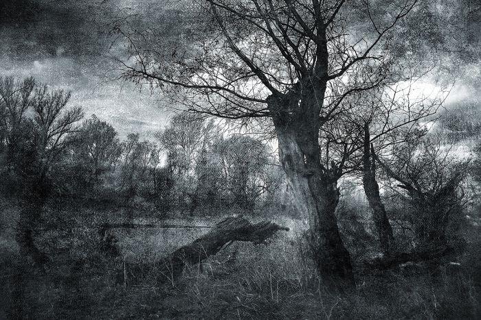 Foto Kunst Schilderijen: Glas schilderij foto kunst zwart foto natuurgebied