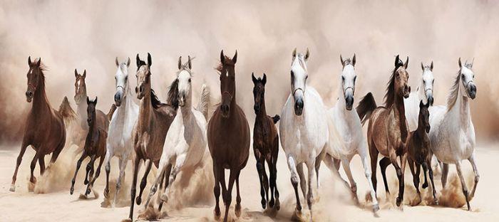Dieren Schilderijen: Glas Schilderij Dertien Paarden
