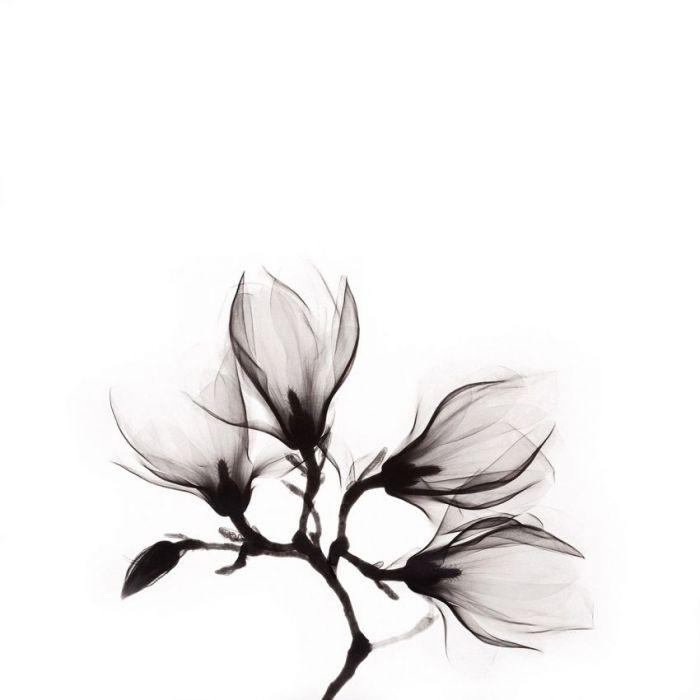 Bloemen Schilderijen: ART OF NATURE - Bloemen
