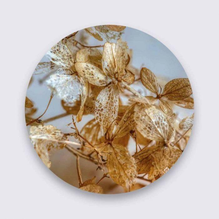 Foto Kunst Schilderijen: Beige Bladeren Art Of Nature Collectie Wandkraft Aluminium Schilderij