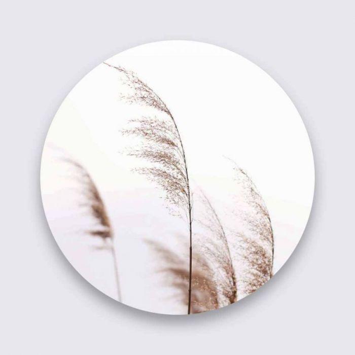 Foto Kunst Schilderijen: Beige Palmgras Art Of The Nature Aluminium Pure Metal Collectie Wandkraft Schilderij