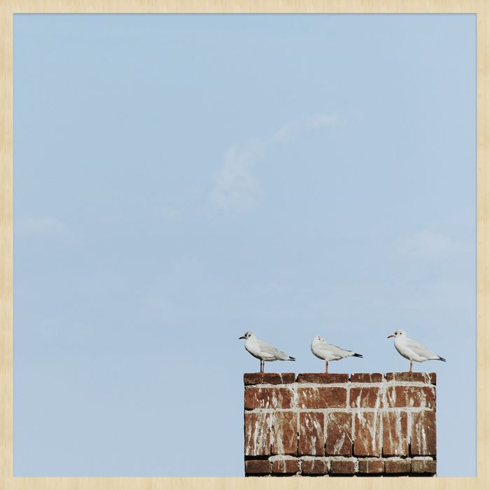 Dieren Schilderijen: Summer Time Wandkraft Collectie Forex Schilderij Meeuwen