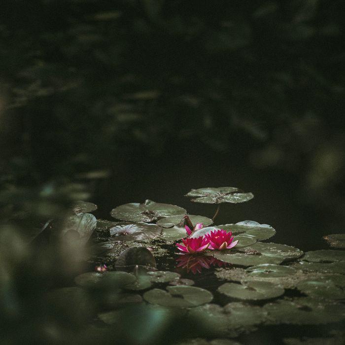 Foto Kunst Schilderijen: Natuur Water Lelies Knalroze Art Of Nature Wandkraft Schilderijen