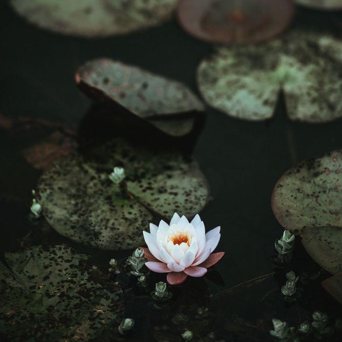 Bloemen Schilderijen: Art Of Nature Witte Water Lelie Bloem Wandkraft Collectie