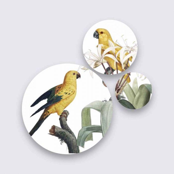 Bloemen Schilderijen: Sun Conure Papegaaien Op Tak Bright Wings Collectie Wandkraft Schilderijen