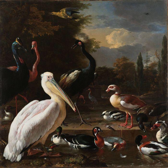 Dieren Schilderijen: Wandkraft Collectie Dibond Schilderij Het Drijvend Veertje Melchior d Hondecoeter