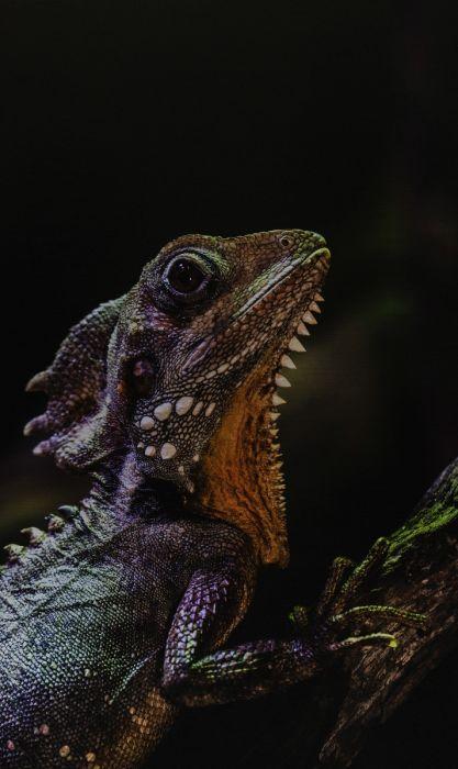 Dieren Schilderijen: Wonderful Life Wandkraft Collectie Reptiel Kameleon
