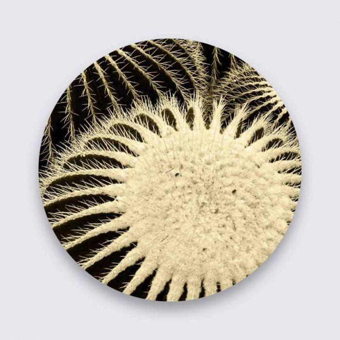 Foto Kunst Schilderijen: Zwart Wit Foto Cactus Art Of Nature Pure Metal Schilderijen