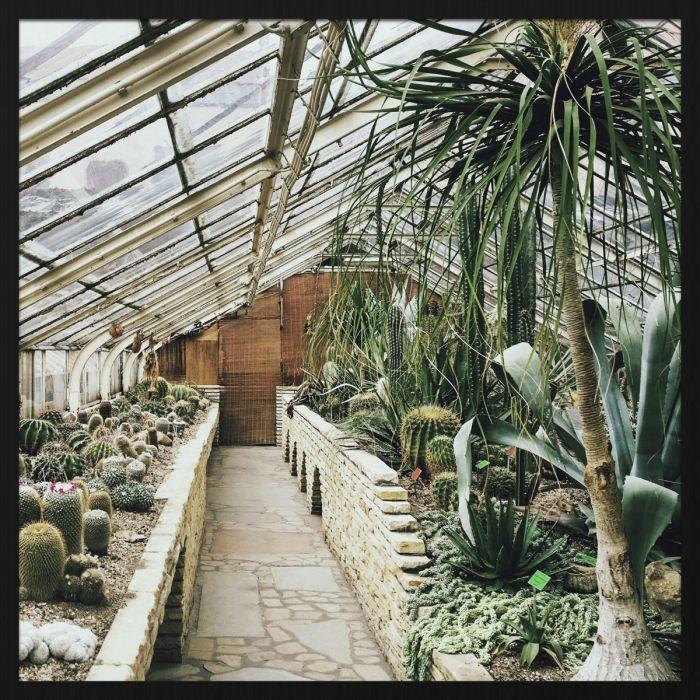 Foto Kunst Schilderijen: Exotische Planten Kas Botanical Stories Forex Schilderij Wandkraft Collectie