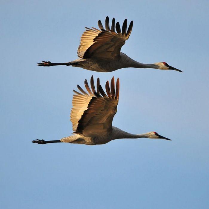 Dieren Schilderijen: Wandkraft Collectie Land Of The Rising Sun Vogels Vliegen Schilderij