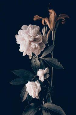 Pioenroos Rozen Lelie Bladeren Bloemen Art Kunst 80x120