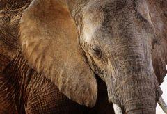 Glas schilderij olifant huid textuur 160x110