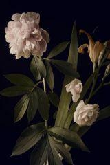 Lelie Pioen Rozen Wit Groen Blad Bloemen Kunst 80x120
