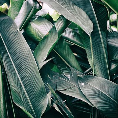 Moderne Kleuren Donker Groen
